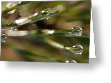 Pine Drops Greeting Card