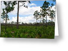 Pine Flatwoods Greeting Card by Steven Scott