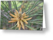 Pine Flower In Summer  Close Up Greeting Card