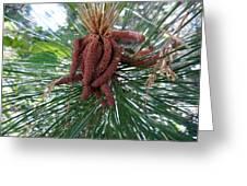 Pine Flowers Greeting Card