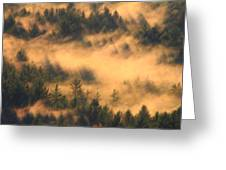 Pine Forest And Fog Greeting Card