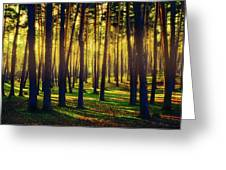 Pine Forest In La Boca Del Asno-segovia-spain Greeting Card