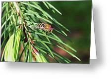 Pine Fresh Greeting Card