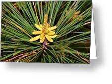 Pine In Bloom Greeting Card