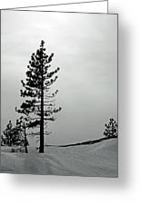 Pine In Snow Greeting Card