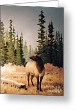 Pine Meadow Elk Greeting Card