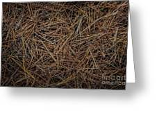 Pine Needles On Forest Floor Greeting Card