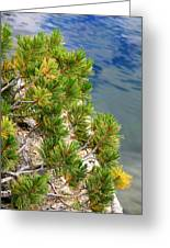 Pine Needles Over Water Greeting Card