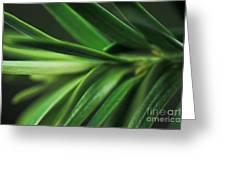 Pine Needles Greeting Card by Ryan Kelly
