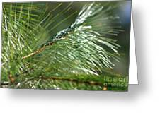Pine Needles Series 1 Greeting Card