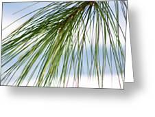 Pine Needles Series 3 Greeting Card