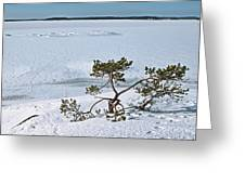 Pine On A Rock Greeting Card