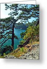 Pine Over The Bay Greeting Card