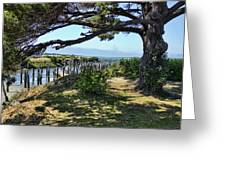 Pine Pilings And Mist Greeting Card