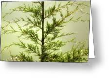 Pine Shower Greeting Card