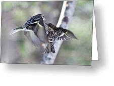 Pine Siskins Fighting 6829 Greeting Card