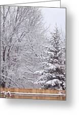 Pine Tree - Winter Scene Greeting Card