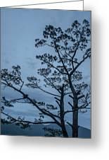 Pine Tree Antigua Guatemala Greeting Card