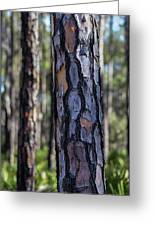 Pine Tree Bark Greeting Card