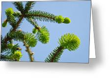 Pine Tree Branches Art Prints Blue Sky Botanical Baslee Troutman Greeting Card