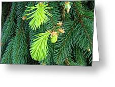 Pine Tree Branches Art Prints Conifer Forest Baslee Troutman Greeting Card