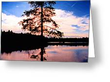 Pine Tree By Peck Lake 5 Greeting Card