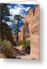 Pine Tree Canyon Greeting Card