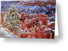Pine Tree In Bryce Canyon Greeting Card