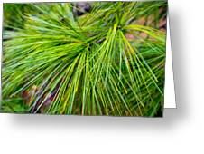 Pine Tree Needles Greeting Card
