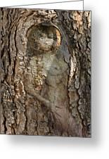 Pine Tree Nymph Greeting Card