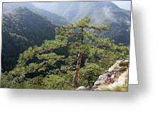Pine Tree On Mountain Landscape Greeting Card