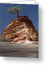 Pine Tree On Sandstone Greeting Card