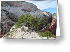 Pine Tree On Top Of Angels Landing In Zion Greeting Card