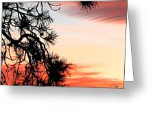 Pine Tree Silhouette Greeting Card
