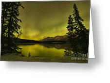 Pine Tree Silhouettes Greeting Card