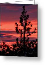 Pine Tree Sunrise Greeting Card