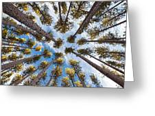 Pine Tree Vertigo Greeting Card