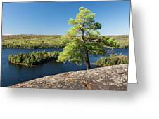 Pine Tree With A View Greeting Card