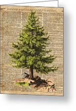 Pine Tree,cedar Tree,forest,nature Dictionary Art,christmas Tree Greeting Card