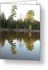 Pine Trees Across Mississippi River Greeting Card