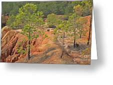 Pine Trees And Forest Greeting Card