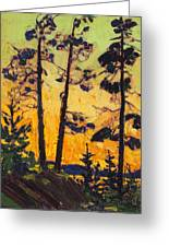 Pine Trees At Sunset Greeting Card