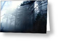 Pine Trees In Fog Greeting Card