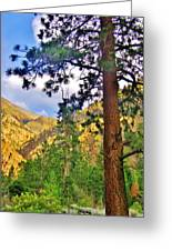 Pine Trees Greeting Card