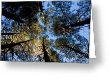 Pine Trees Near Ruidoso Nm Greeting Card