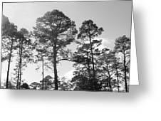 Pine Trees Greeting Card