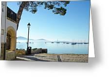 Pine Walk Morning, Puerto Pollensa Greeting Card