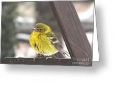 Pine Warbler Greeting Card