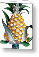 Pineapple, 1789 Greeting Card