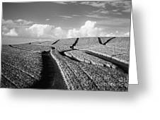 Pineapple Field - Bw Greeting Card